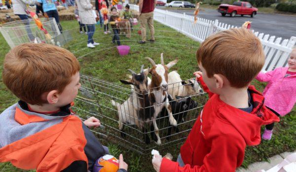 A mini petting zoo entertains families